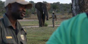 elephant-moments_11b