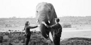 elephant-moments_17