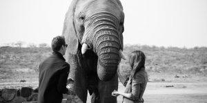 elephant-moments_3b