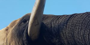 elephant-moments_8